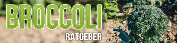 Broccoli Anbau Ratgeber