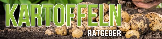 Kartoffeln_Ratgeber