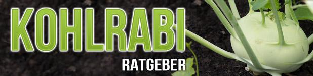 Kohlrabi Headerbild mit Text