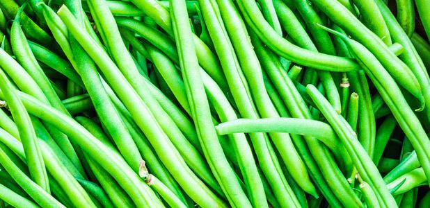 Bohnen Saat Grün Lecker viele Bohnen