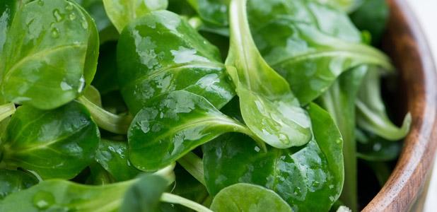Feldsalat Zubereitet Vorspeise Lecker Grün